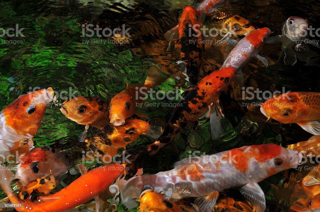 golden Fisch Lizenzfreies stock-foto