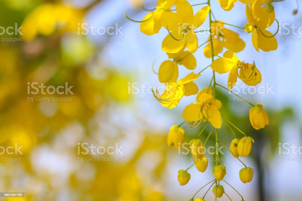 golden flower royalty-free stock photo