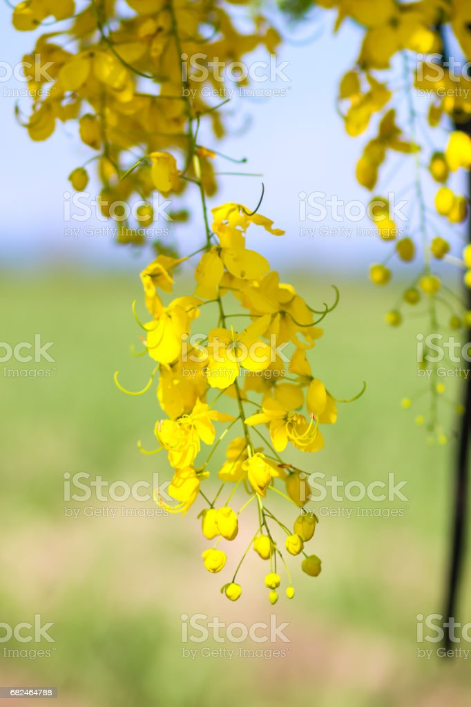golden flower royalty-free stock photo