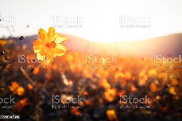 Sunset,Sunrise - Dawn,Flowers,Fog,Autumn