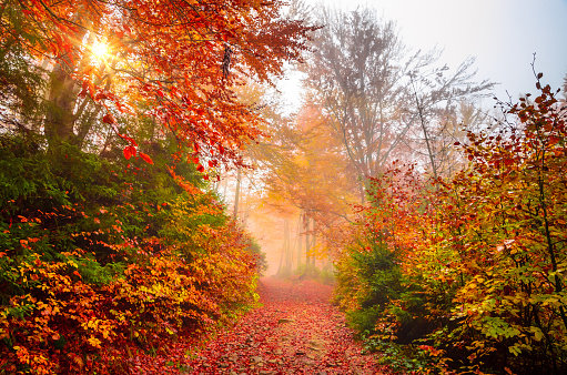Golden forest with fog and warm light