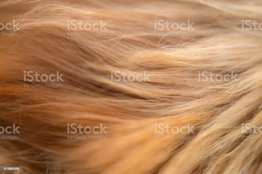 Golden Fur stock photo