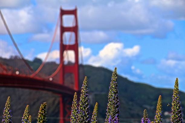 golden gate bridge - aleks66 stock pictures, royalty-free photos & images