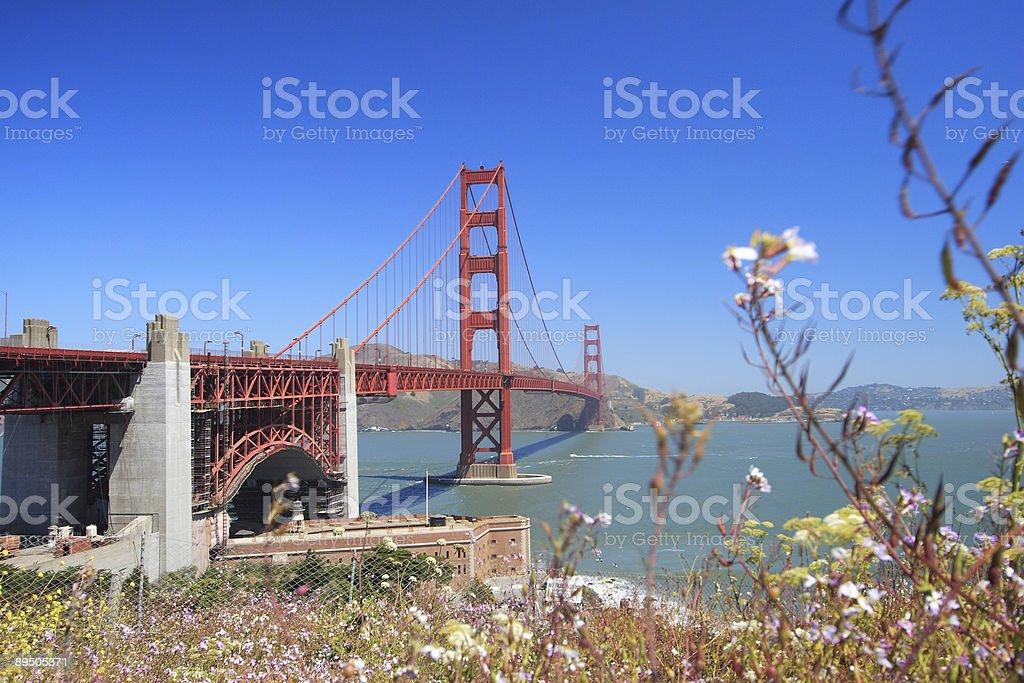 Golden Gate Bridge & Plants royalty-free stock photo