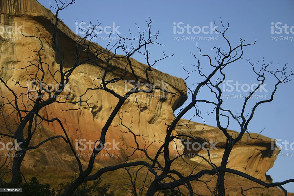 Golden Gate Trees And Cliff royalty-free stock photo