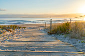 Beach walkway with golden glow of sedge growing on sand as dune protection at Papamoa, Tauranga New Zealand.