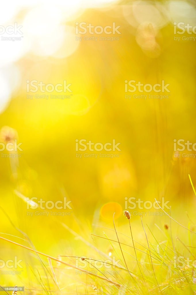 Golden glow royalty-free stock photo