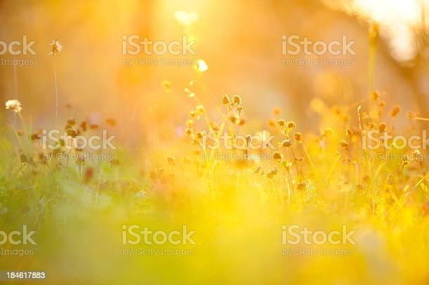 Photo of Golden grass