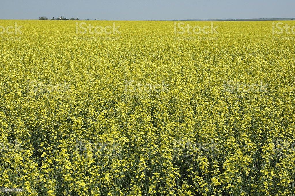 Golden Harvest stock photo