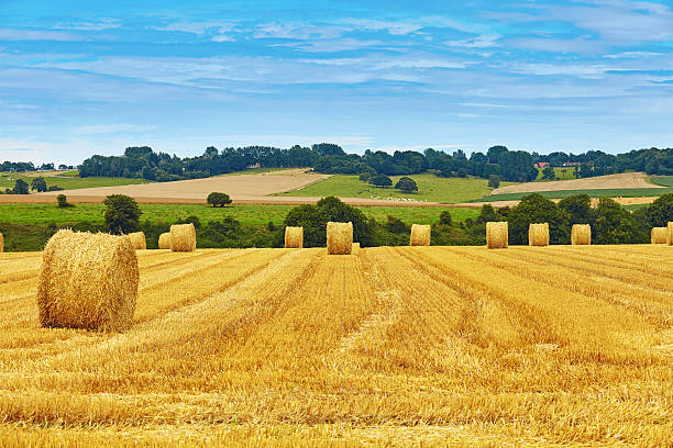 Golden hay bales in countryside Golden hay bales in French countryside hay stock pictures, royalty-free photos & images