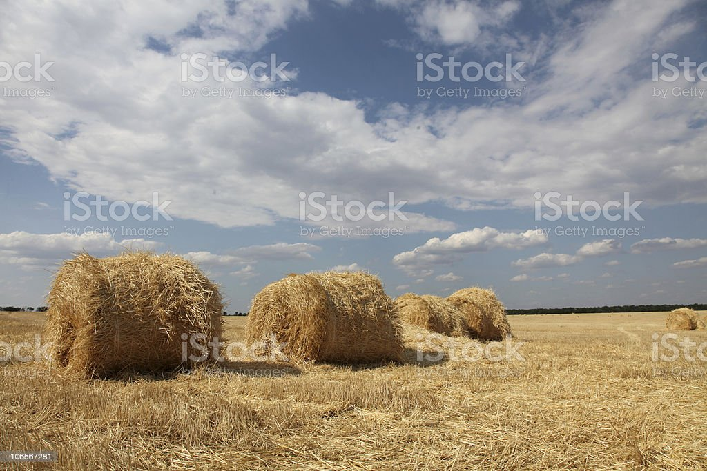 Golden Hay Bales in the countryside royalty-free stock photo