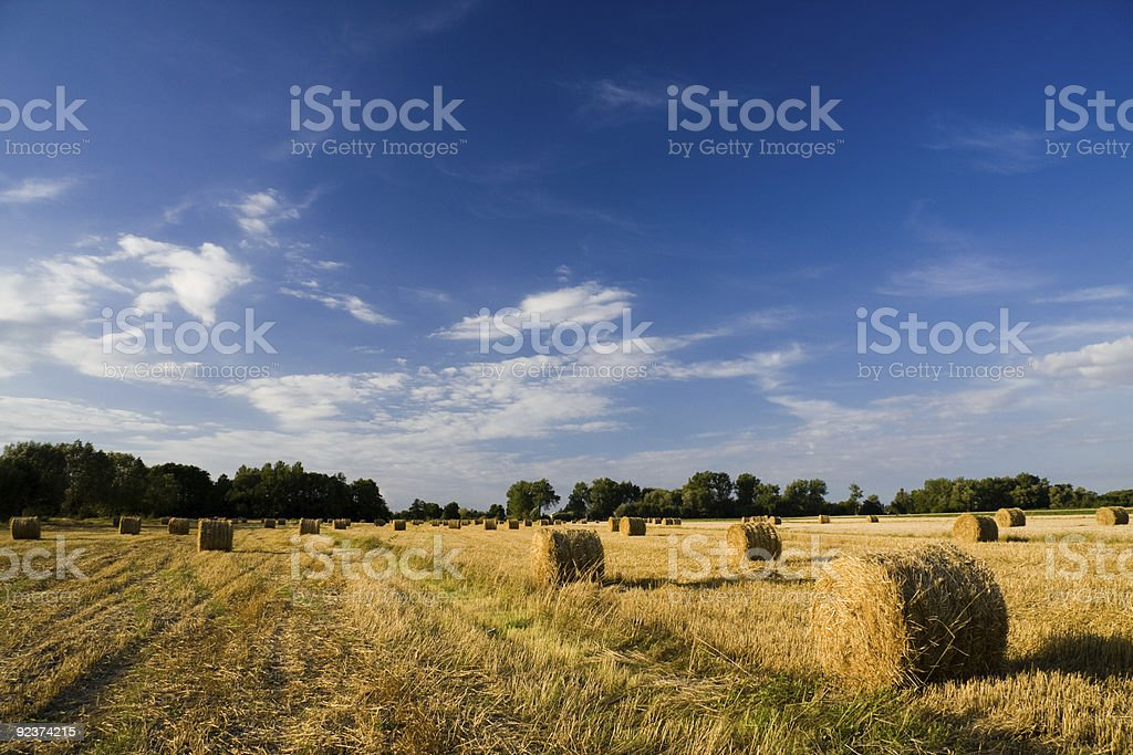 Golden hay bales on a field royalty-free stock photo