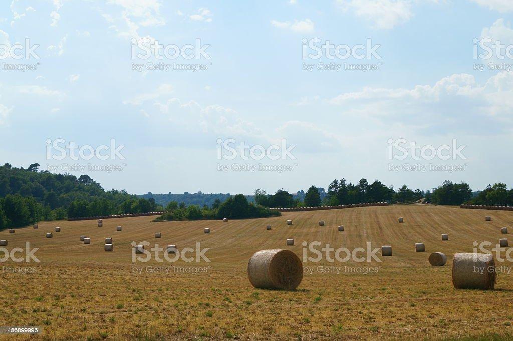 Golden hay bales stock photo