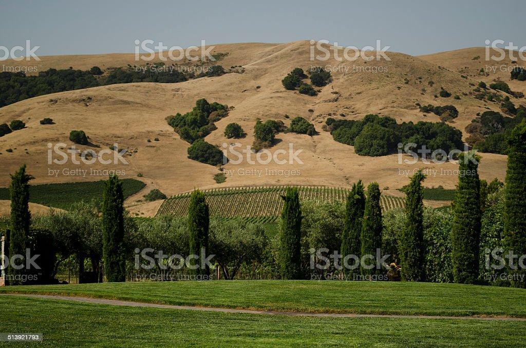 Golden hills of California stock photo