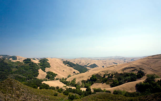 golden hills of paso robles, california - central coast california stock photos and pictures