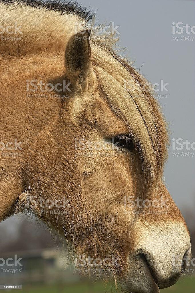 Golden horse royalty-free stock photo