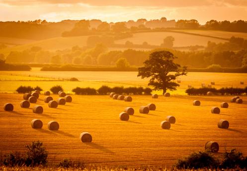 istock Golden hour hay bales 186040288