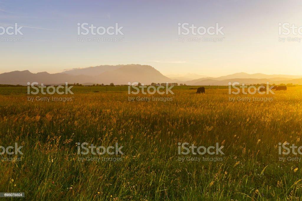 Golden Hour in the Carpathian Mountains Romania stock photo