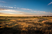 Golden hour landscape of wild grass flowing in the wind in the wetlands of the Cosumnes River Preserve in Galt California with the sun setting through clouds on the horizon.