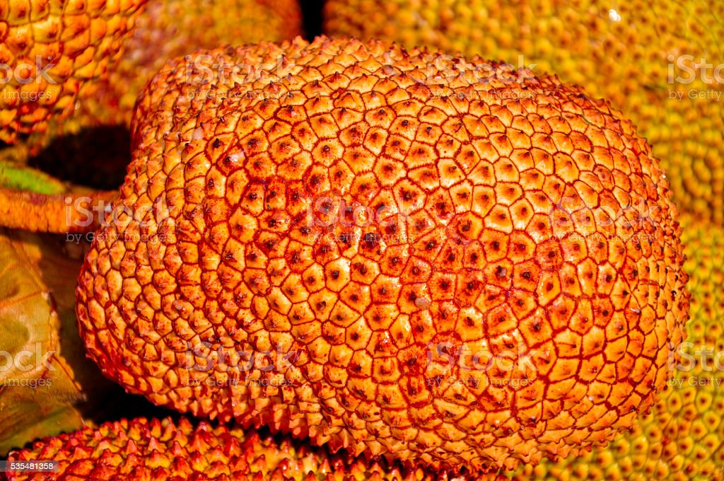 Golden Jack fruit for sale  at fresh fruit market Thailand stock photo