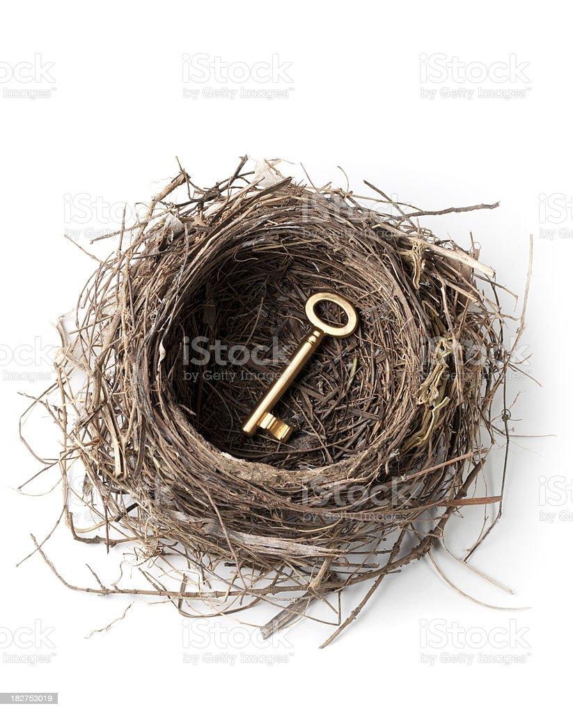 Golden key in the nest stock photo
