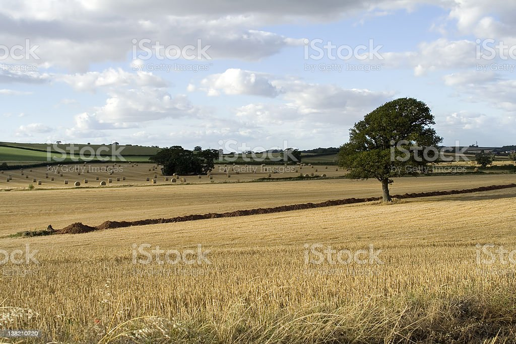 Golden landscape royalty-free stock photo