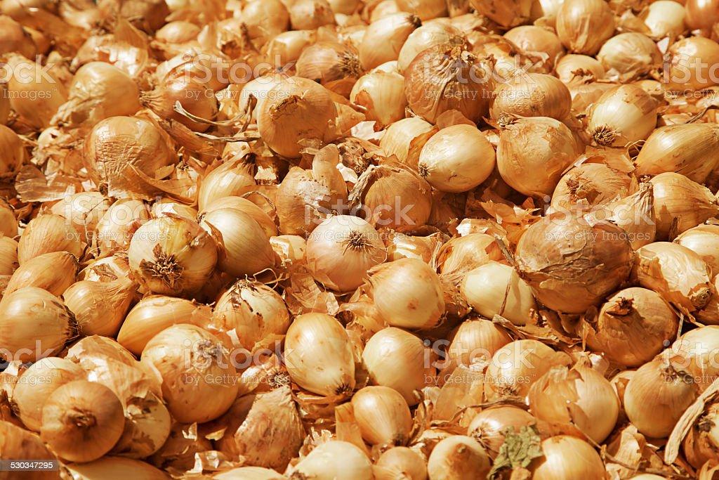 Golden large onion stock photo