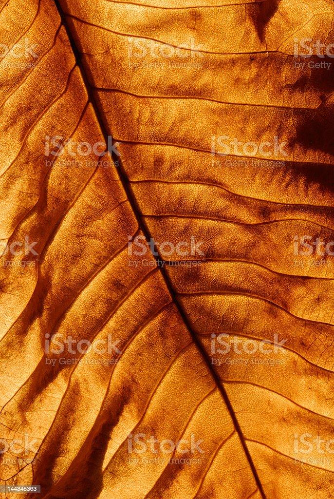 Golden leaf background royalty-free stock photo