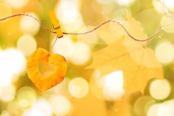 golden leaf herzform angeheftet auf seil draußen, herbst gelb - herz zitate stock-fotos und bilder