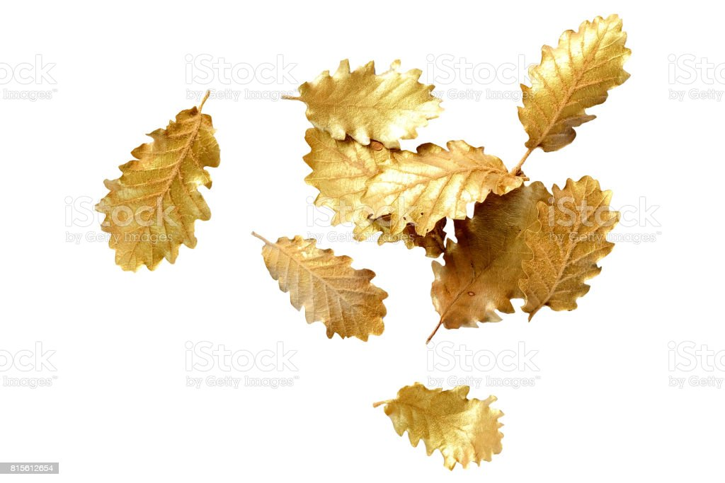 Golden leaf on white background with copy space stock photo