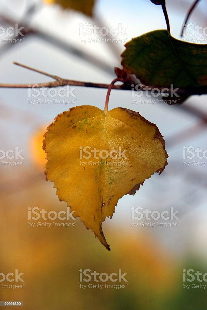 golden leaf royalty-free stock photo
