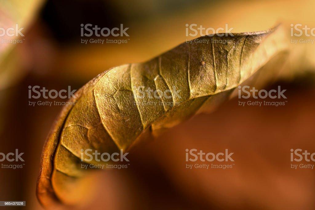 Golden leaf zbiór zdjęć royalty-free