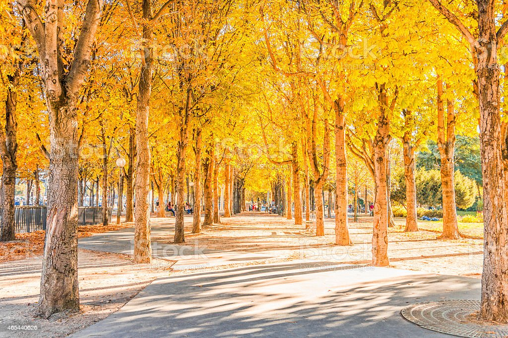 Golden leaf trees planted around the park stock photo