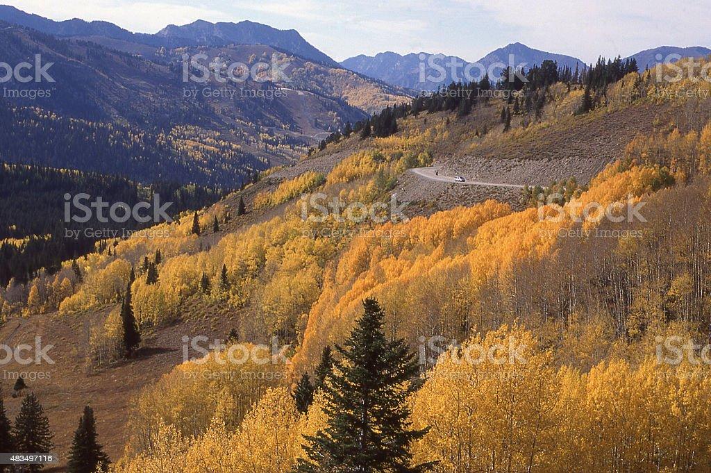 Golden Leaves of Autumn Big Cottonwood Canyon Wasatch Mountains Utah stock photo