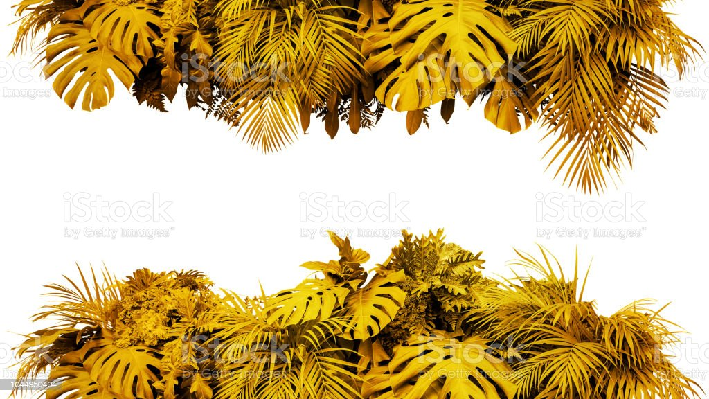 golden leaves tropical foliage plant bush nature frame border gold new year backdrop isolated on white