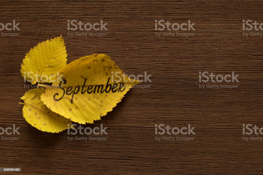Golden leaves with the inscription SEPTEMBER on the dark wooden background. stock photo