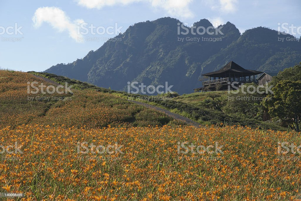 golden lily flower with a pavilion royalty-free stock photo