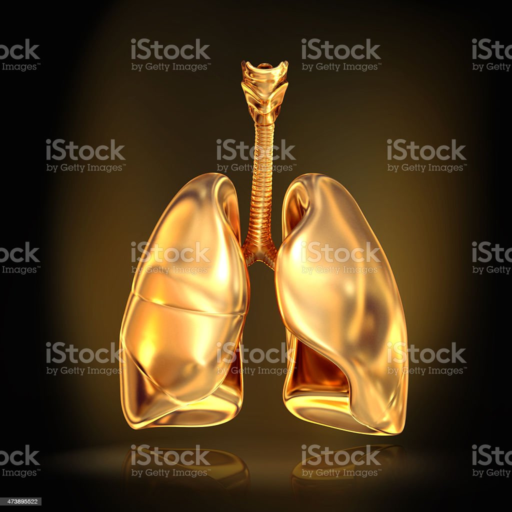 Golden lungs on black  background. stock photo