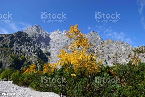 Photo of golden maple tree at Wimbachgries valley, Berchtesgaden national park, Bavaria, Germany, with Mt. Hochkalter