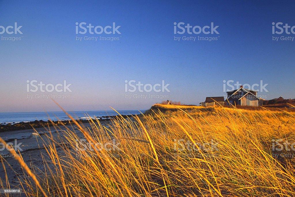 Golden Marsh stock photo