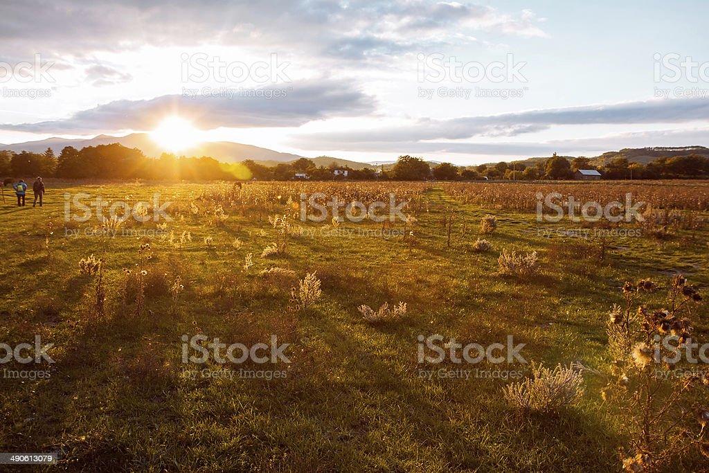 Золотой луг солнечный свет на горы стоковое фото
