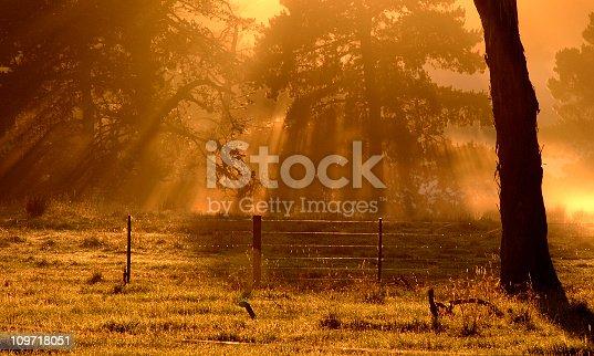 Sun filtering through trees early morning (no colour correction)