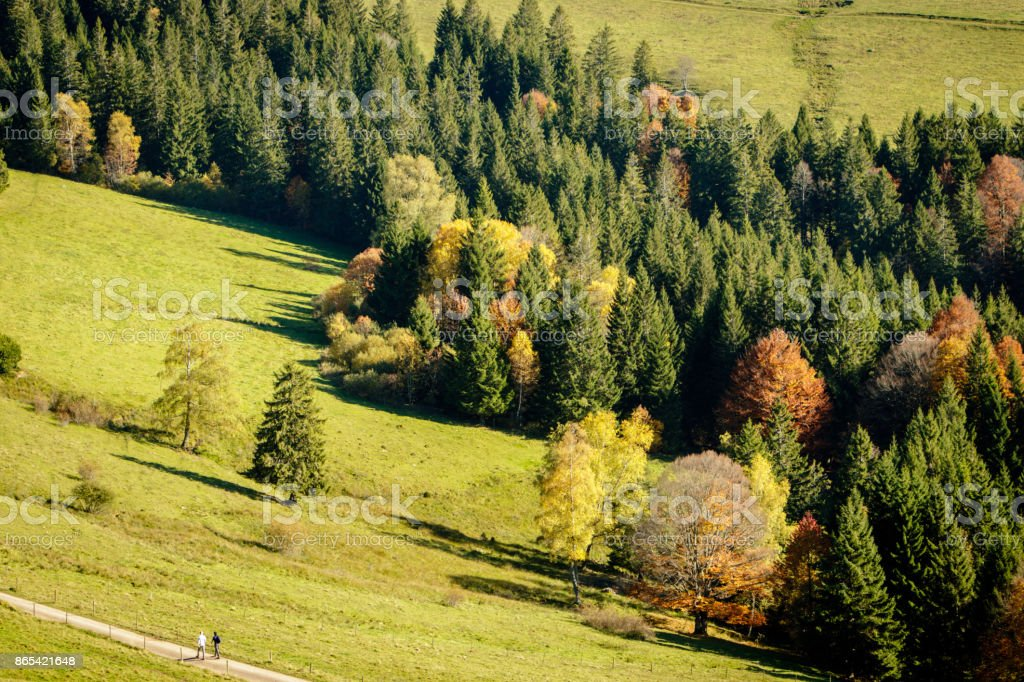 Golden October Black Forest stock photo