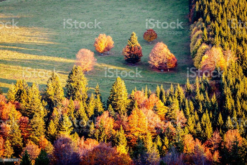 Golden October stock photo