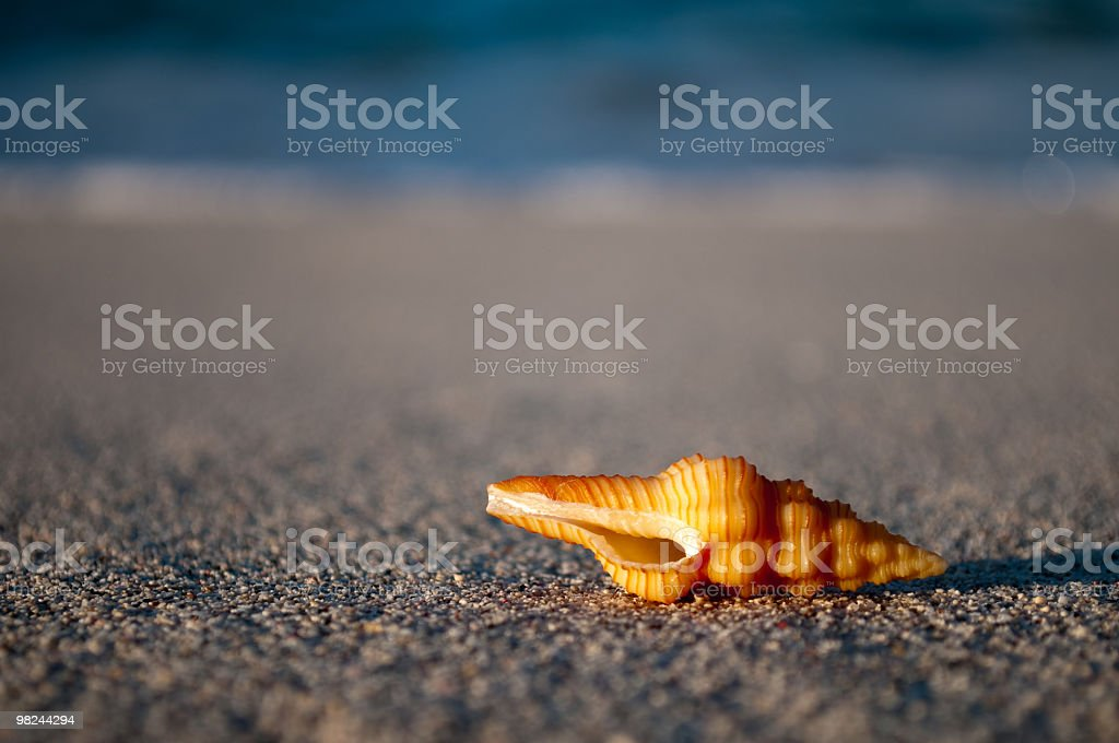 Golden orange sea shell on beach late afternoon royalty-free stock photo