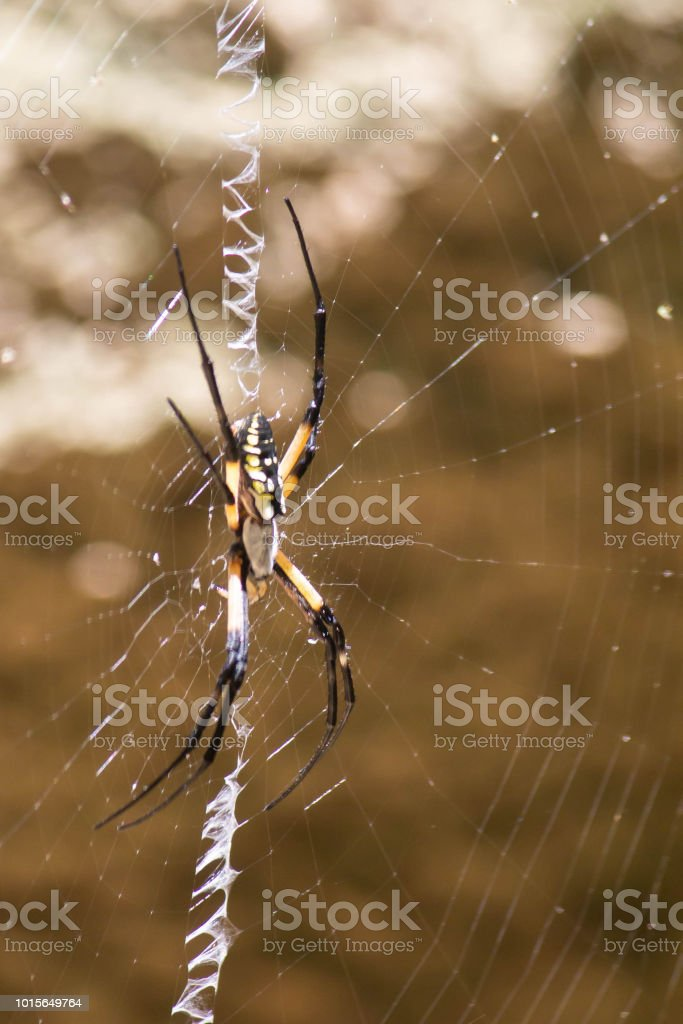 weber spinne