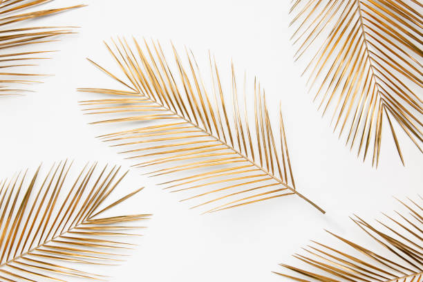 branches de palmier d'or sur le fond blanc - couleur des végétaux photos et images de collection