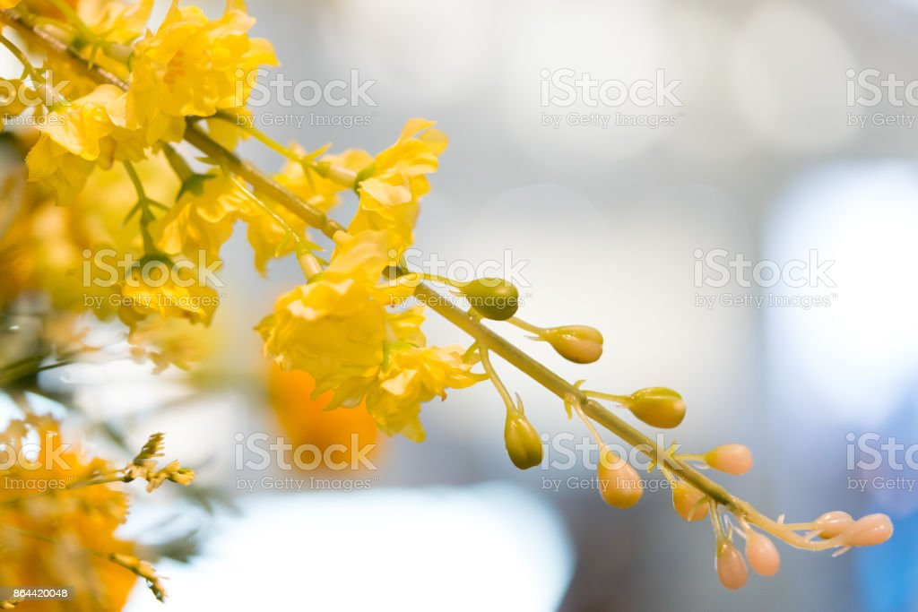 Golden rain tree Copy. stock photo