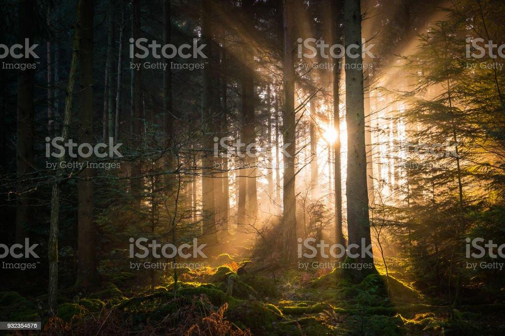Goldene Strahlen von Licht strömt durch ruhige Wälder Waldlichtung – Foto