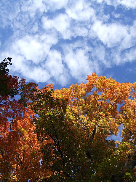 golden, red and orange autumn trees shape clouds - belkindesign stock pictures, royalty-free photos & images